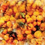 Orange Mini Kit Paper- Oranges