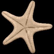 Hollister- Starfish