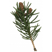 Classic Christmas- Branch