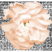 Summer Afternoon- Flower 01