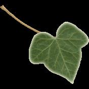 TeaTime-MiniKit- Ivy Leaf