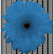 Daisy- Flower 3
