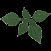 Daisy- Leaves 2