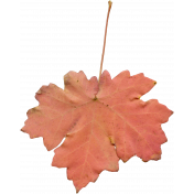 Fall Leaf 05-Bear Wallow AZ