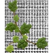 Ivy 01