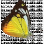 Dinosaur Rawr- Butterfly 01