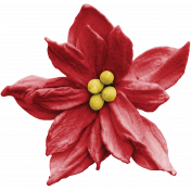 Home for the Holidays Poinsettia