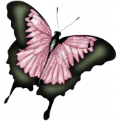 Butterfly Spring- Butterfly 1