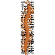 A Bug's World- centipede