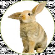Tas_Be Happy It's Spring Rabbit Sticker
