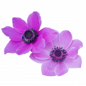 Purple Flower Duo