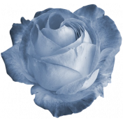 Two Tone Rose Blue 2