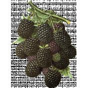 Into the Woods- Blackberries