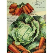 Garden Tales Journal Cards- Cabbage and Carrots 3x4