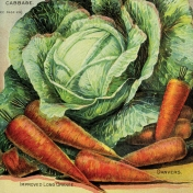 Garden Tales Journal Cards- Cabbage and Carrots 4x4