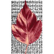 Harvest Pie Red Leaf