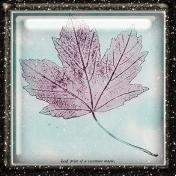 Elegant Autumn Square Leaf Brad