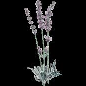 Elegant Autumn Frosty Lavender