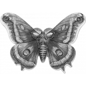 Spring Day Templates- Butterfly Moth