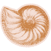 Coastal Spring Tan Shell
