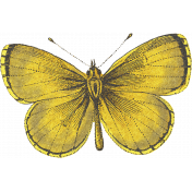 Into The Wild Yellow Butterfly