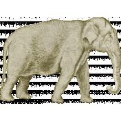 Into The Wild Elephant