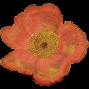 Into The Wild Orange Flower