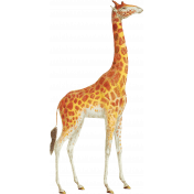 Into The Wild Giraffe