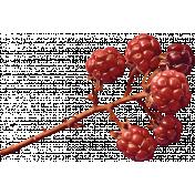 Autumn Bramble Berries