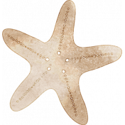 Nantucket Feeling {Sail Away} Starfish