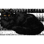Furry Cuddles Black Cat