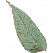 Naturally Curious Leaf 02