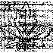 Botanical Sketches No. 1- Leaf 01 Sketch