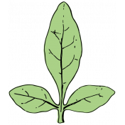 Botanical Sketches No. 1- Leaf 04
