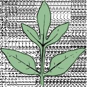 Botanical Sketches No. 1- Leaf 05