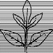 Botanical Sketches No. 1- Leaf 05 Sketch