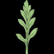 Botanical Sketches No. 1- Leaf 06