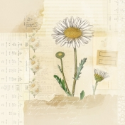 Daisy Afternoon- Pattern Paper 1
