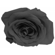 Gray scale Rose 1