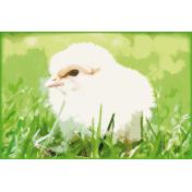 "Easter-Card ""chicks"""