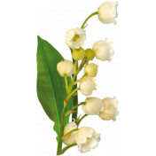 lily of the valley-2