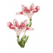 gladiolus blossoms with leaves