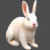 3D-Angora rabbit white-2