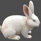 3D-Angora rabbit white-3