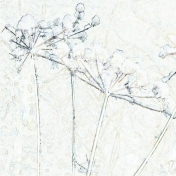 mudsa-magic winter- pap42