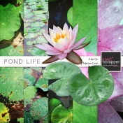 Pond Life Add-On Mini Kit