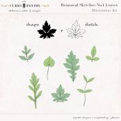 Botanical Sketches No. 1 Leaves