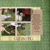 Guneia Pig