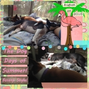 The Dog Days of Summer 2015