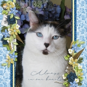 Bugsy- Always in Our Hearts